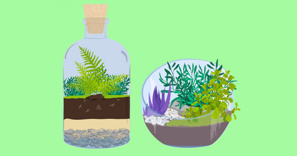 Do It Yourself : Terrarium