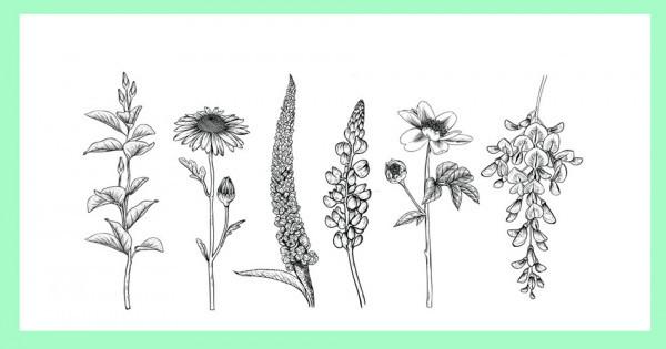 Dégustation de fleurs Visio