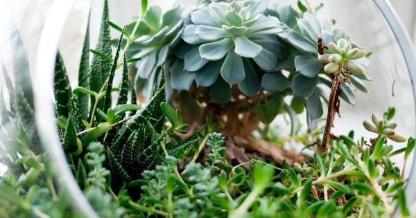 Green It Yourself : Terrarium